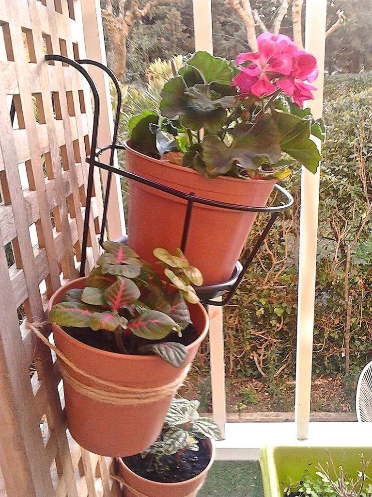 à l'intérieur du meuble (entre les deux planches alvéolées) j'ai mis un pot avec des fleurs grimpantes :) hâte que cela pousse !
