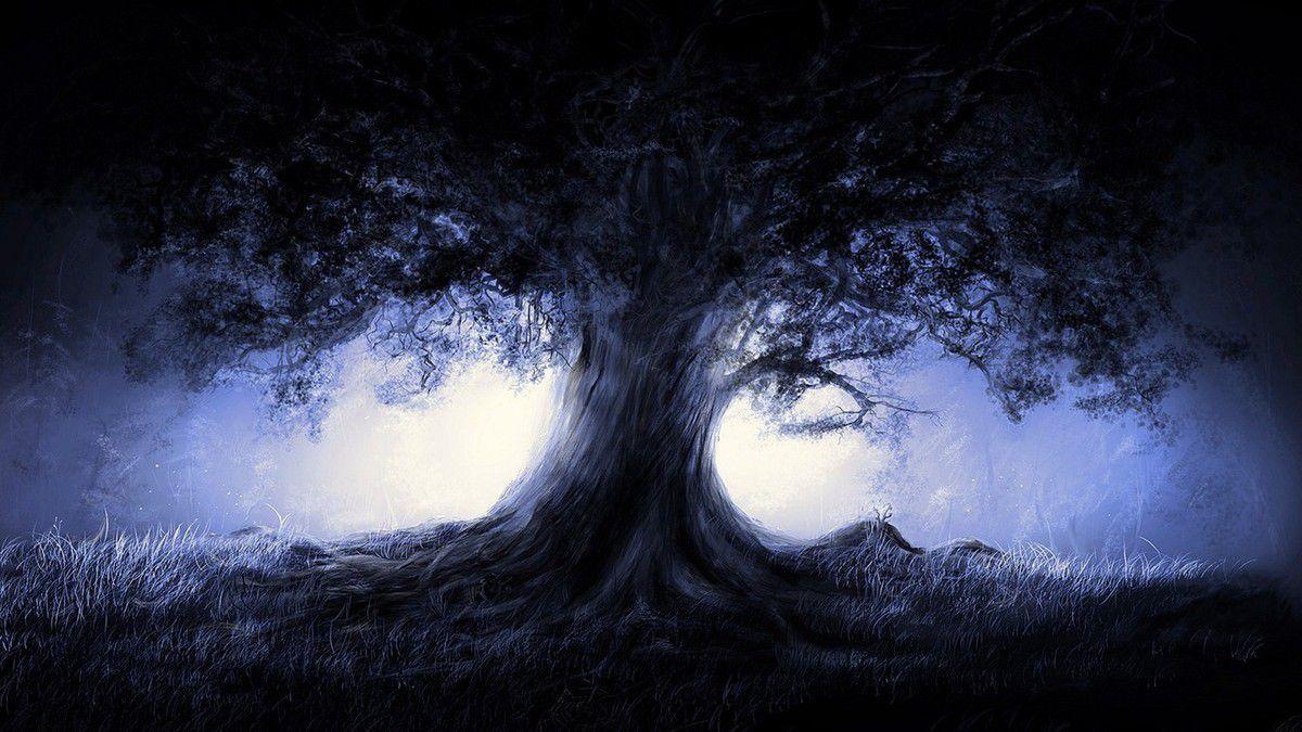 Un chêne dans la nuit