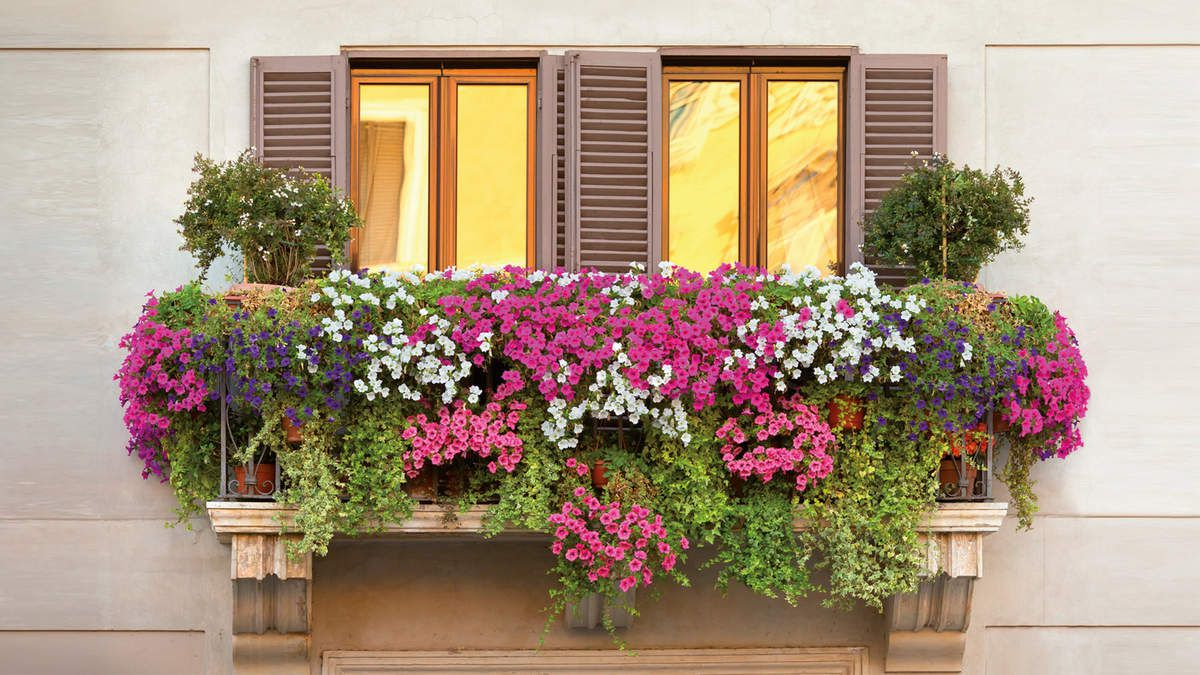 AVB entretien vos plantes sur le balcon