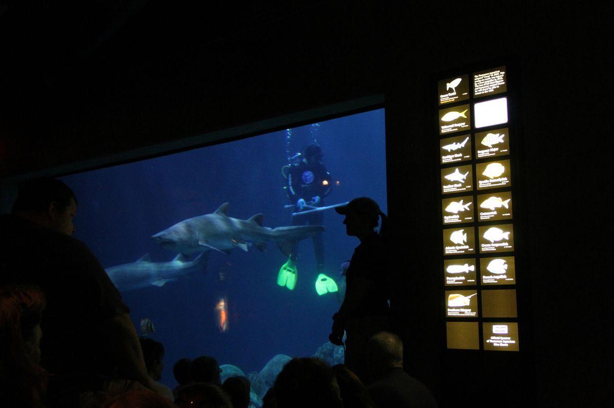 Aquarium et retour