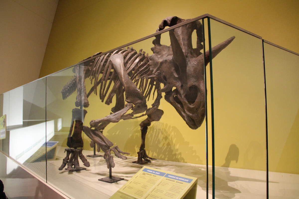 Royal Ontario Muséum Toronto