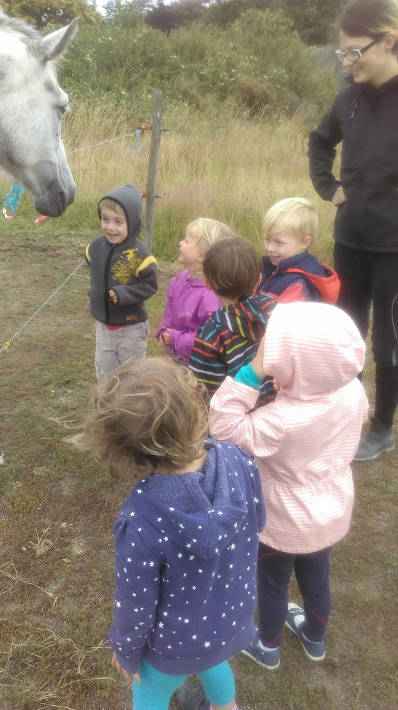 Jour 2: Ecuries du Marickev - Journée Cheval reparties en 5 ateliers: visite des écuries, alimentation, brossage, équitation (ballade) et initiation à la voltige.