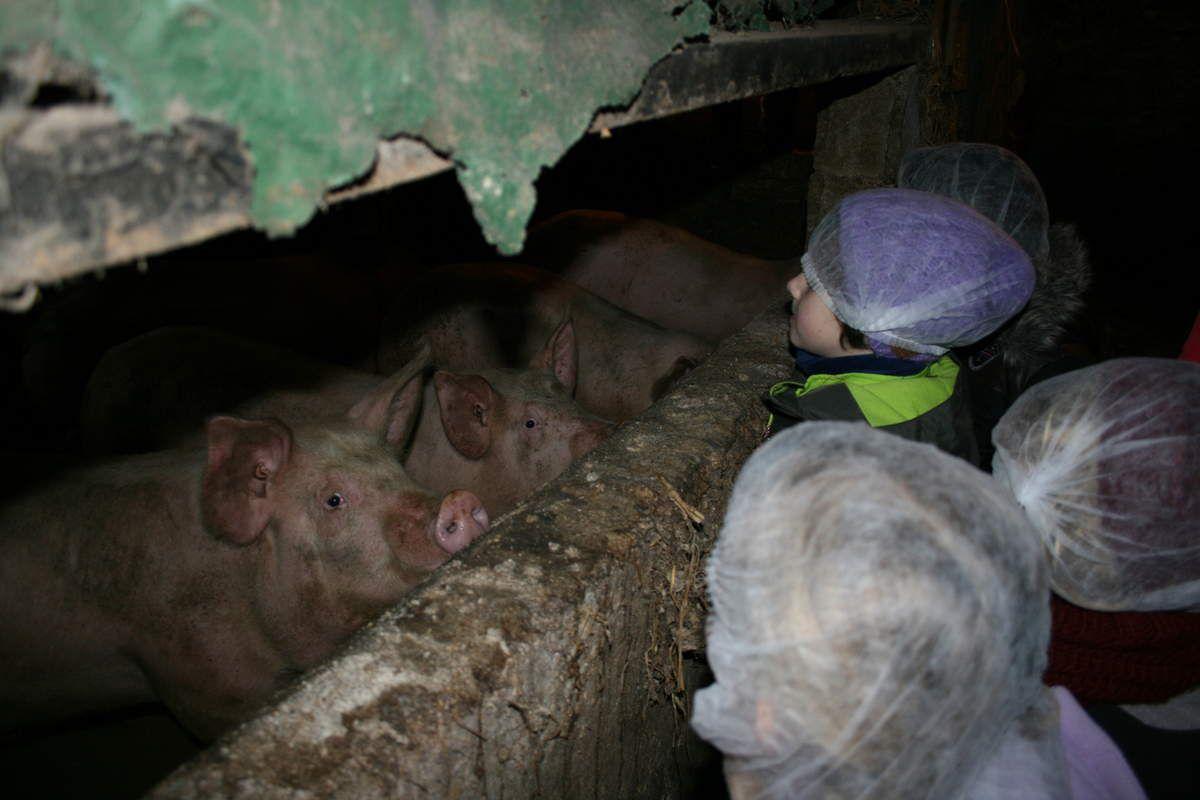 Découverte de la ferme de Mr et Mme Brostin (2)