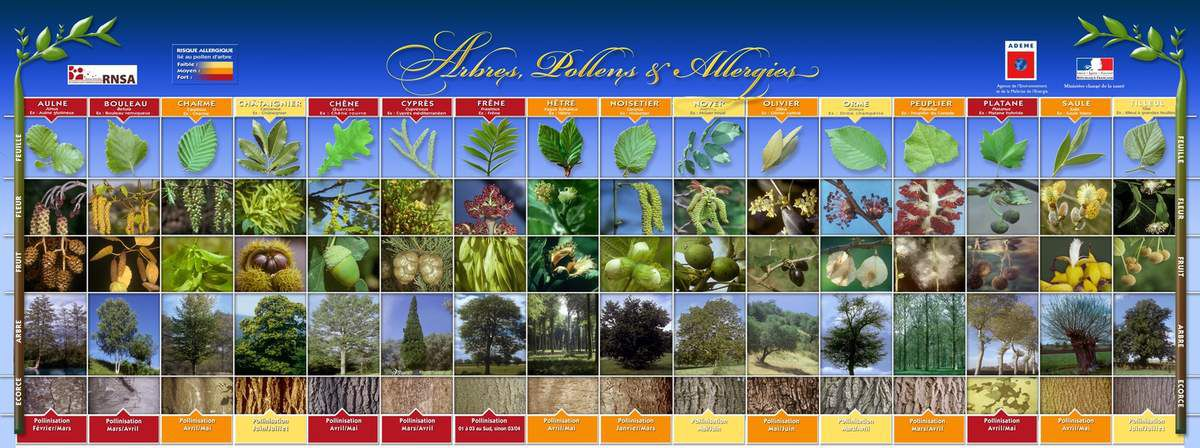 VOS ALLERGIES.... LES DIFFERENTS POLLENS