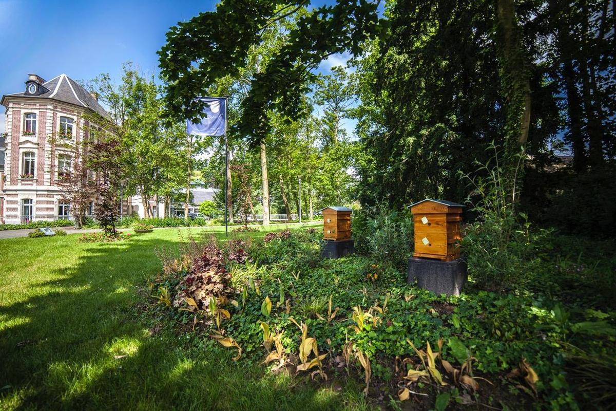 Formation apiculture de loisirs - coquelicot visité par une abeille- abeilles au travail - les ruches du château de Beaulieu à BUSNES