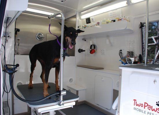 Second Tub Dog Grooming