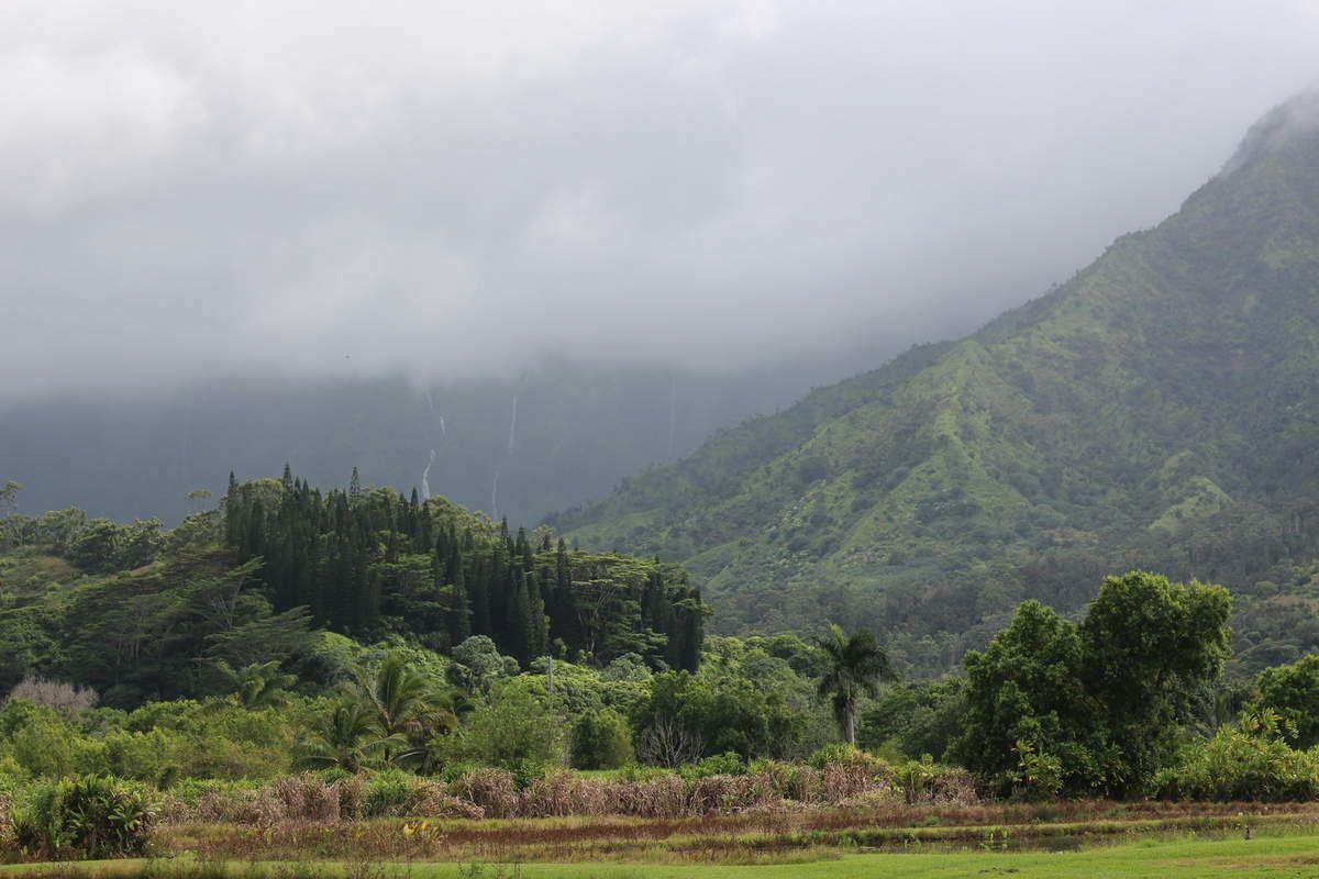 Première photo : Vue de Hanalei Town // Deuxième photo : Les rizières près de Hanalei Town