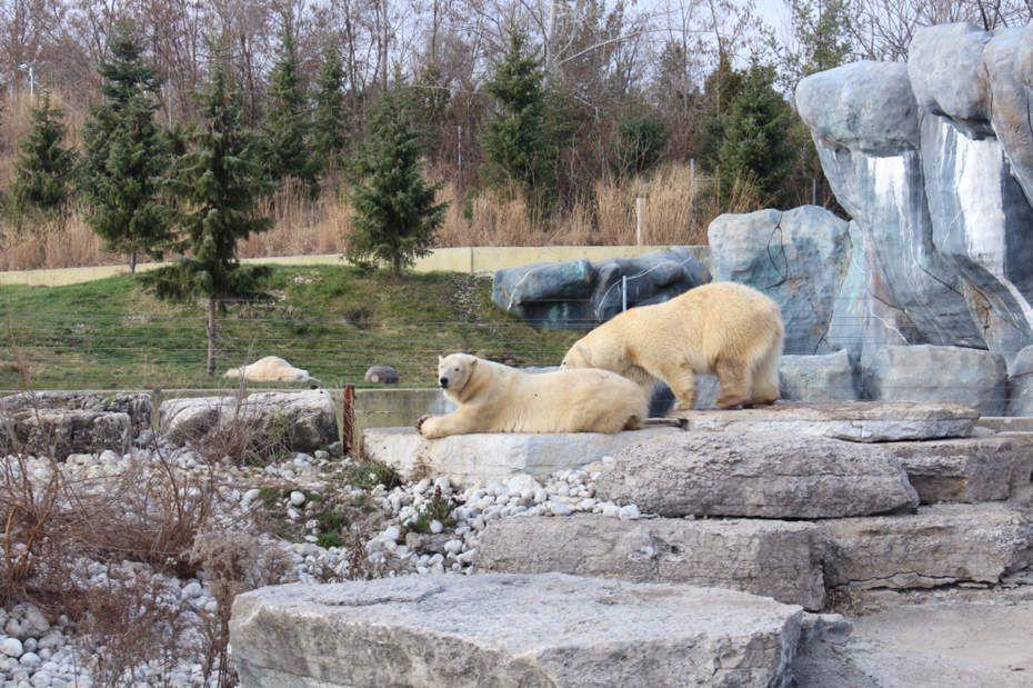 Toronto : Zoo