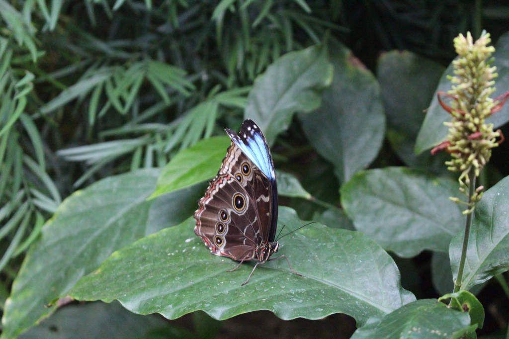 Les Chutes du Niagara : Butterfly Conservatory