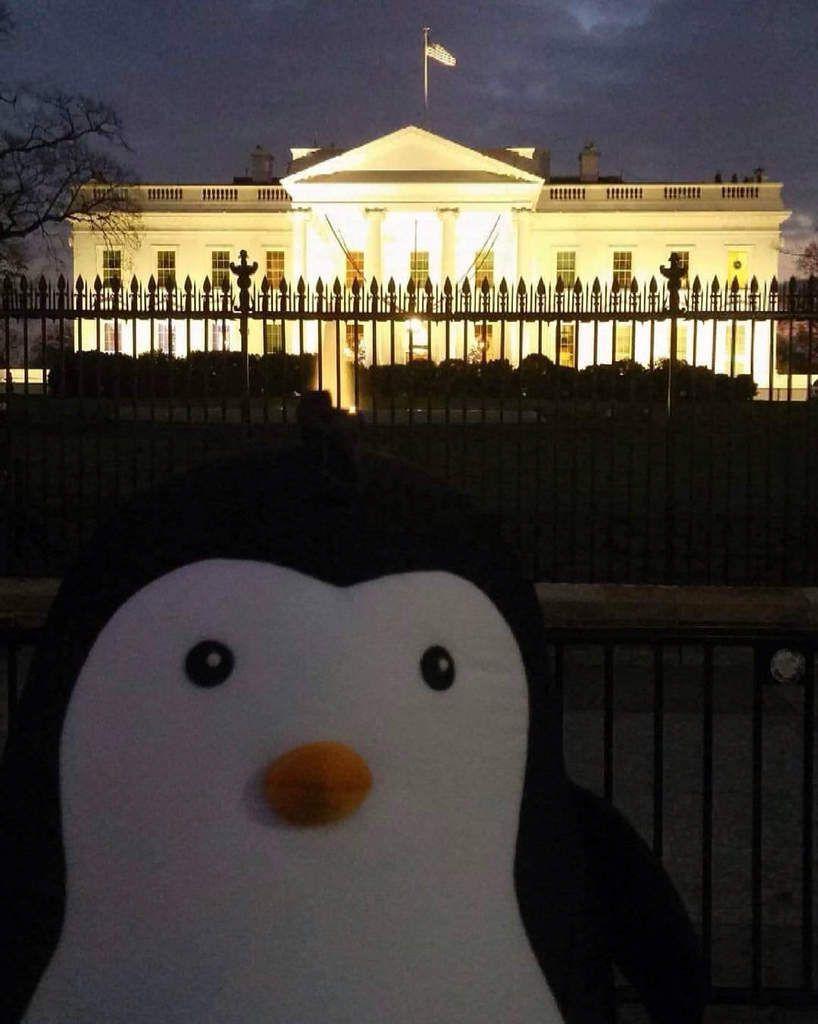 Le Pingouin à Washington !!