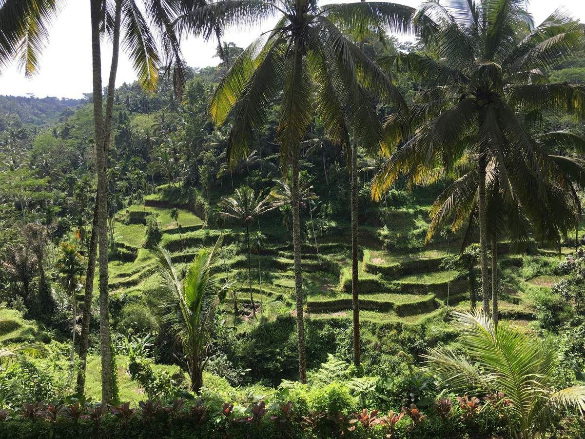 défilés de jeunes. TEGALLALANG rizières en terrasses. MONT BATUR, volcan et son lac.
