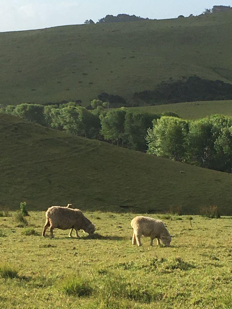 le royaume des troupeaux de vaches et moutons à perte de vue . Le jeu de lumières et ombres est splendide.
