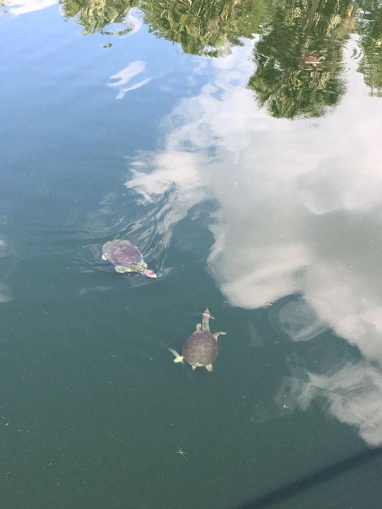 Cá d'ZAN, Florida, la magie du cirque