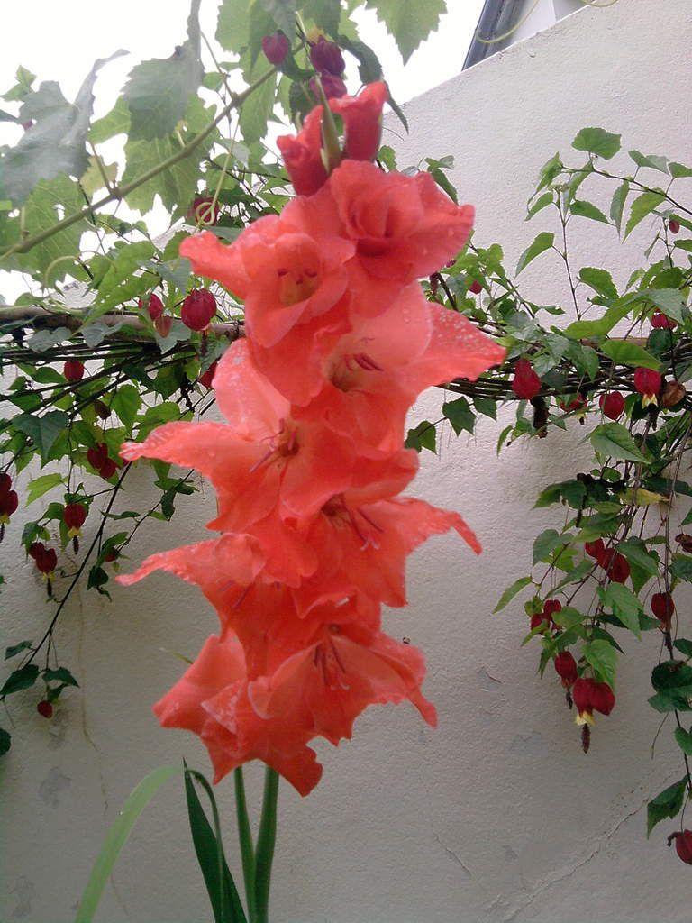 Fleurs Spectaculaires