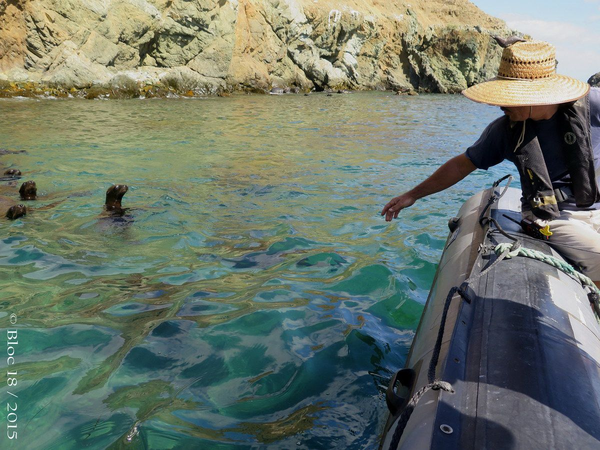 sea lions playing with speed-boat, Cedros Island (Mexico)