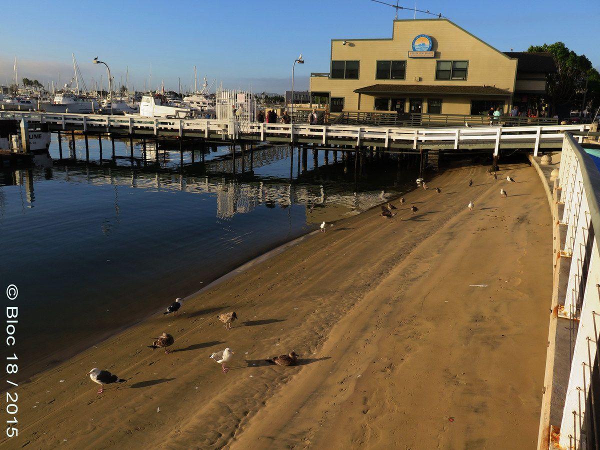 marina of Shelter Island, San Diego (California)