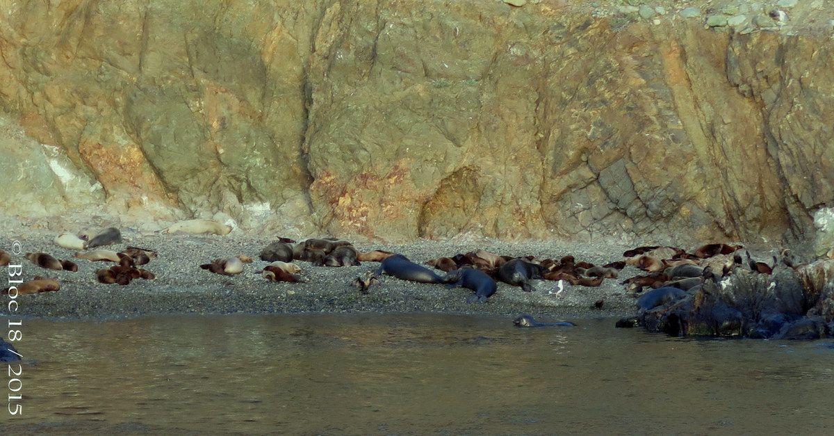 sea lions and sea elephants beach, Cedros Island (Mexico)