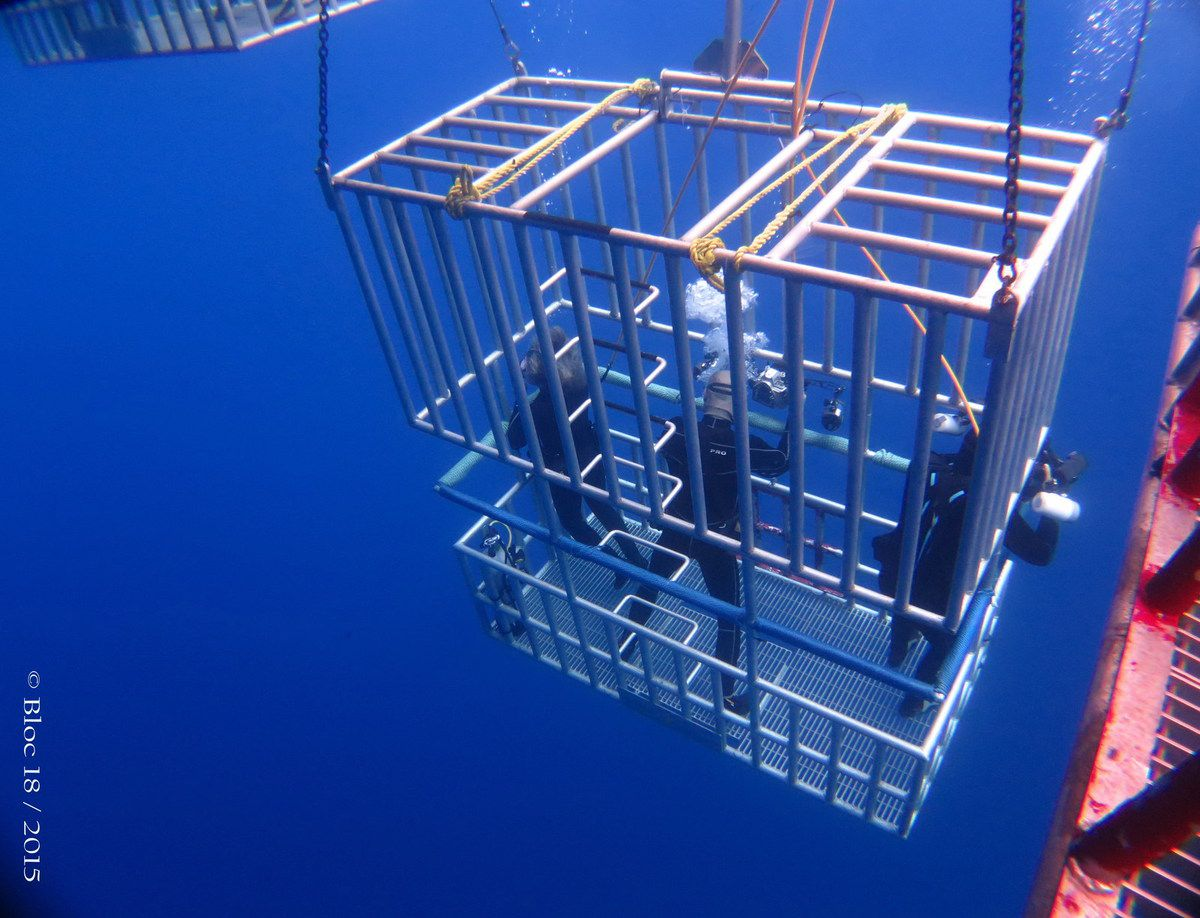 18 feet free surface cage