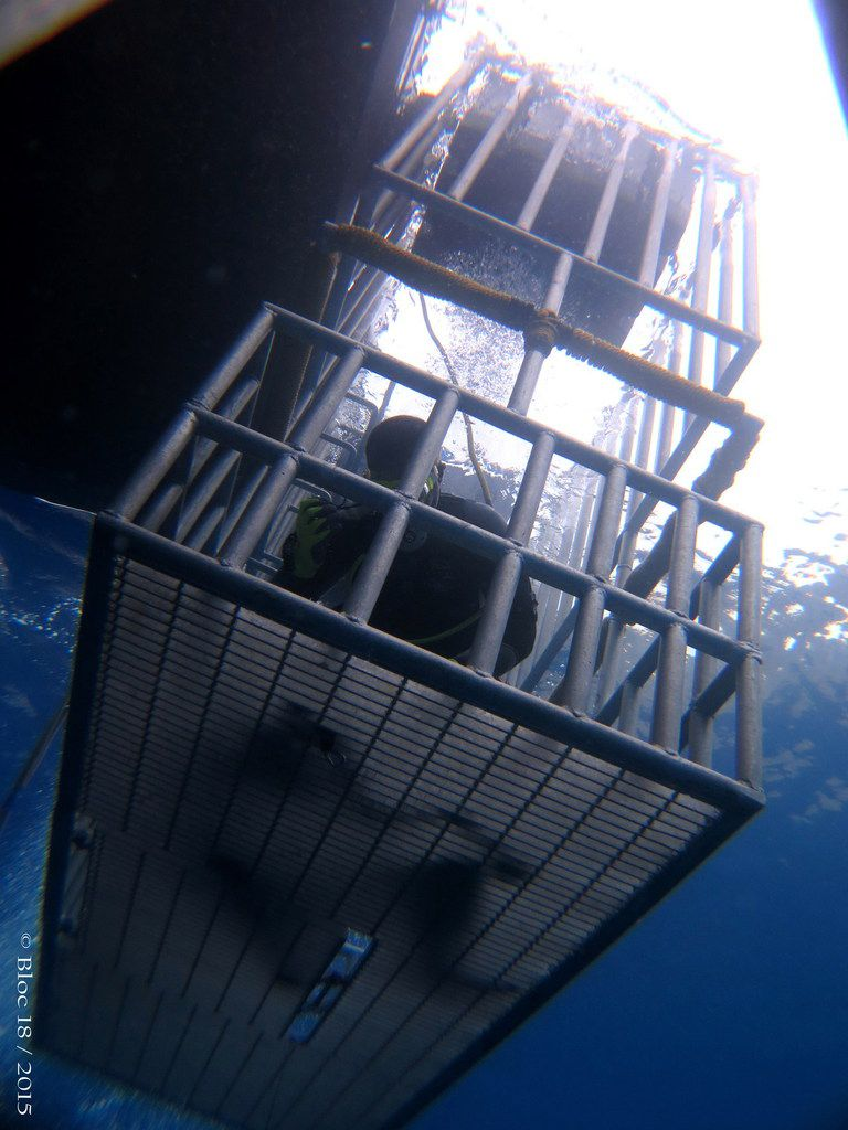 10 feet free surface cage