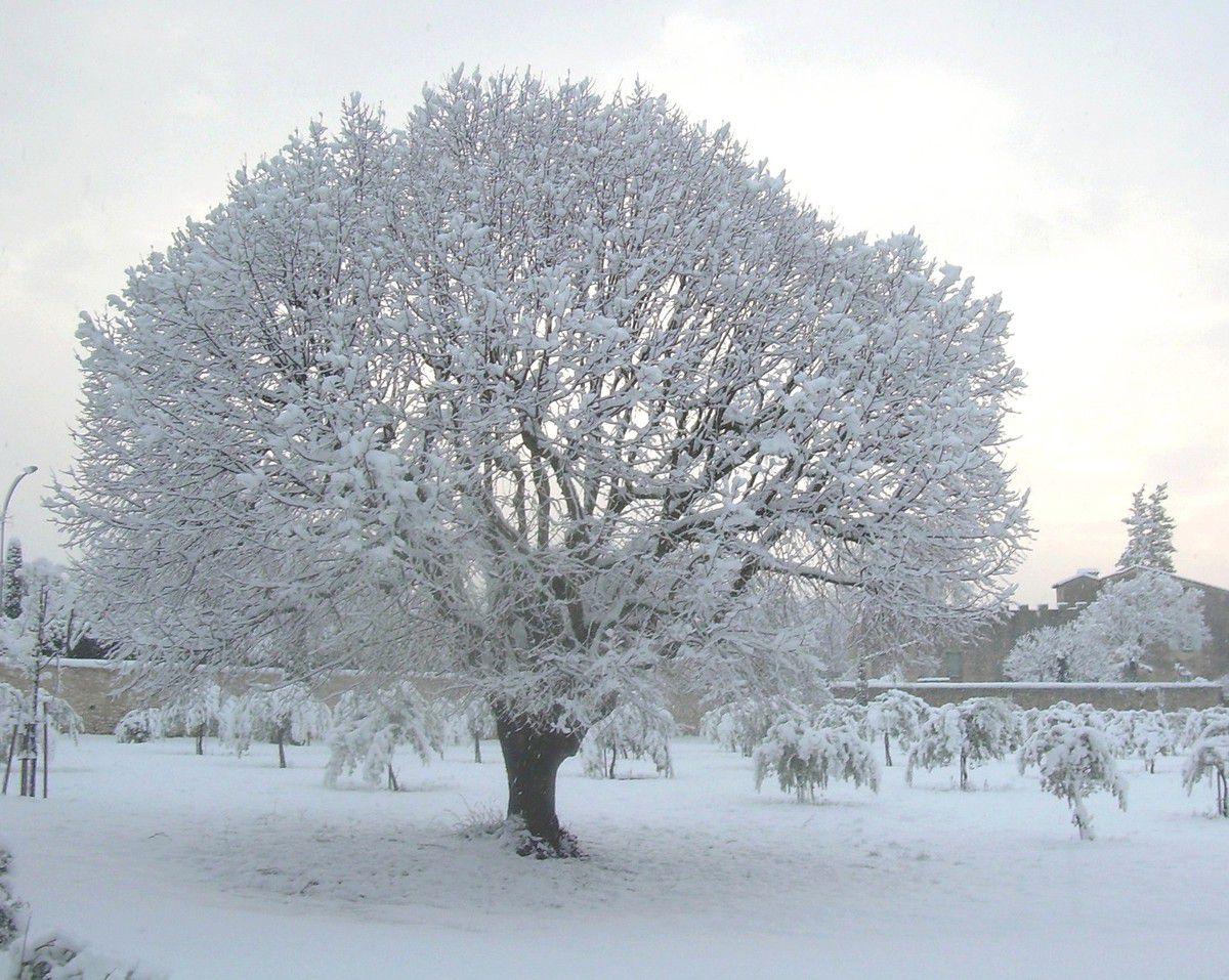 paysage d'hiver à Vaison