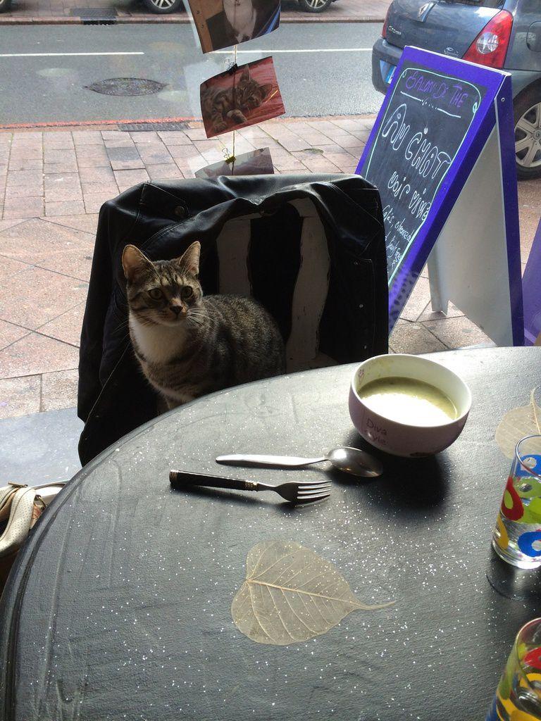 Un salon de thé où les chats sont rois ?