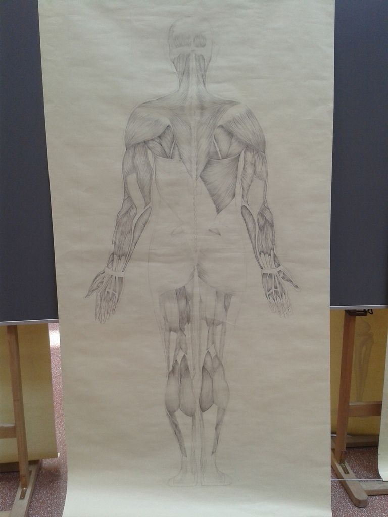 AH1 History of Art /AM1 Study of the human proportions