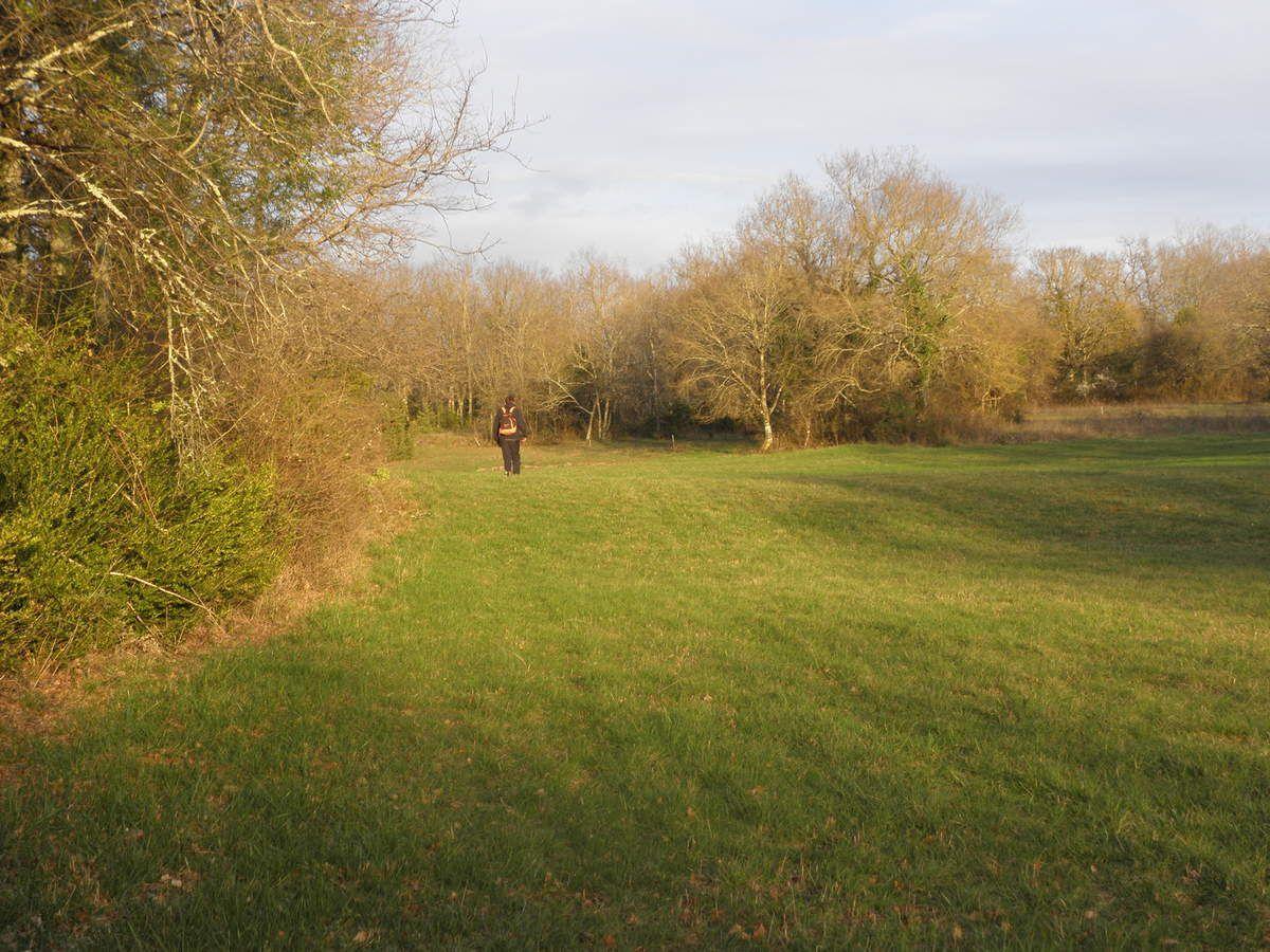 Compte-rendu de la Balade &quot&#x3B;A la recherche des bois de Cerf autour de la Forêt de Grésigne (81 et 82)  du 11 Mars 2017