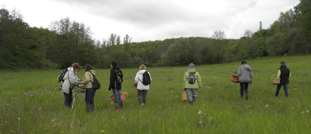 Programme d'Avril 2017 des Balades de Découverte de la Nature