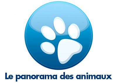 Le panorama des Animaux - Association chats