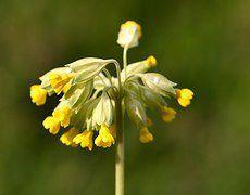 La comestibilité des plantes sauvages, une notion qui n'existe pas