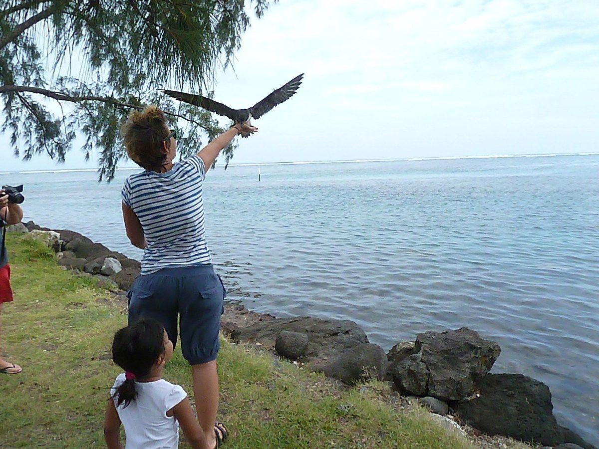 La découverte des oiseaux grâce à l'association SOP Manu