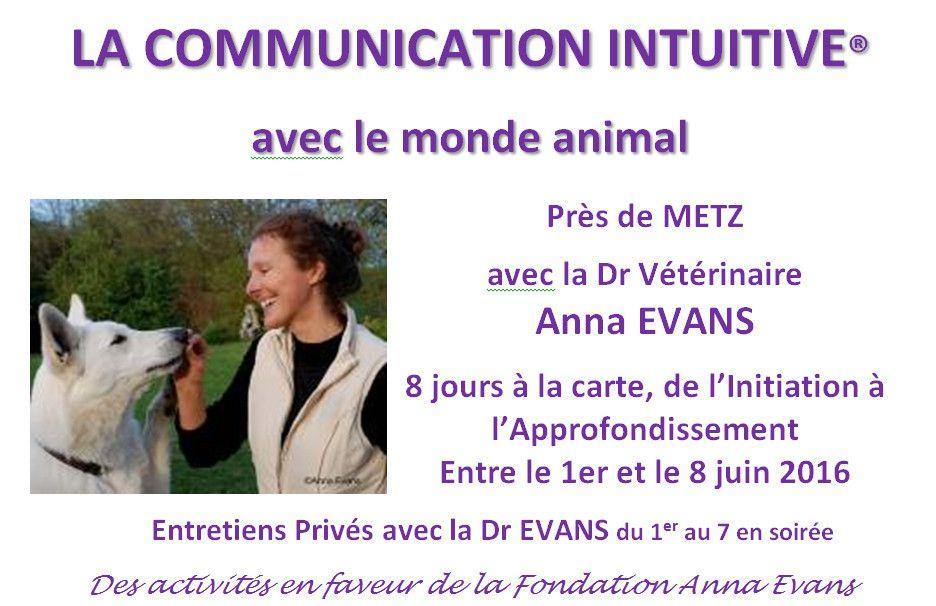 communication intuitive rencontre avec le monde animal anna evans