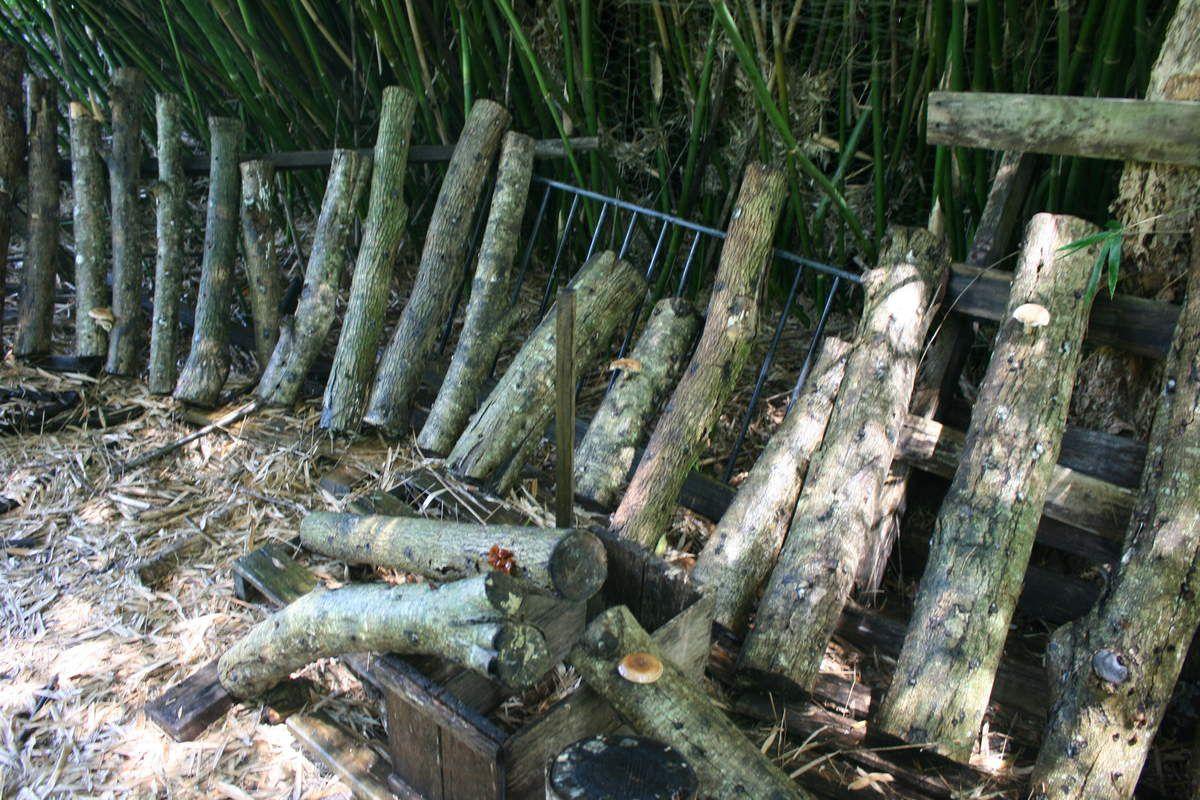 ils arrosent des bûches pour faire pousser des champignons / they water wood logs to grow mushrooms