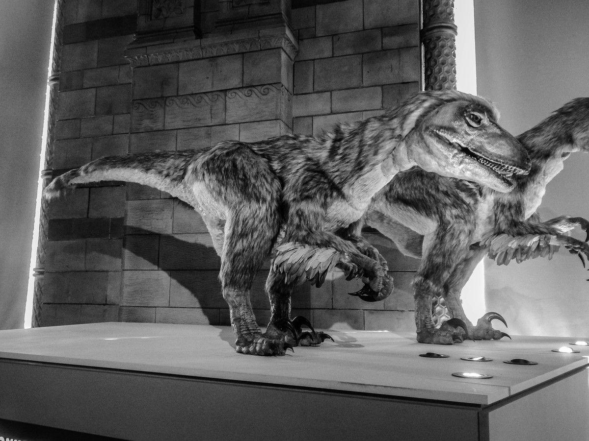 Des dinosaures à plumes, conformément aux recherches et théories actuelles.