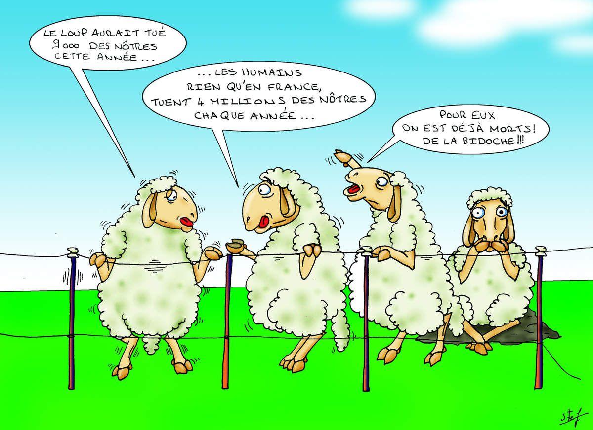 Bouffe moutons