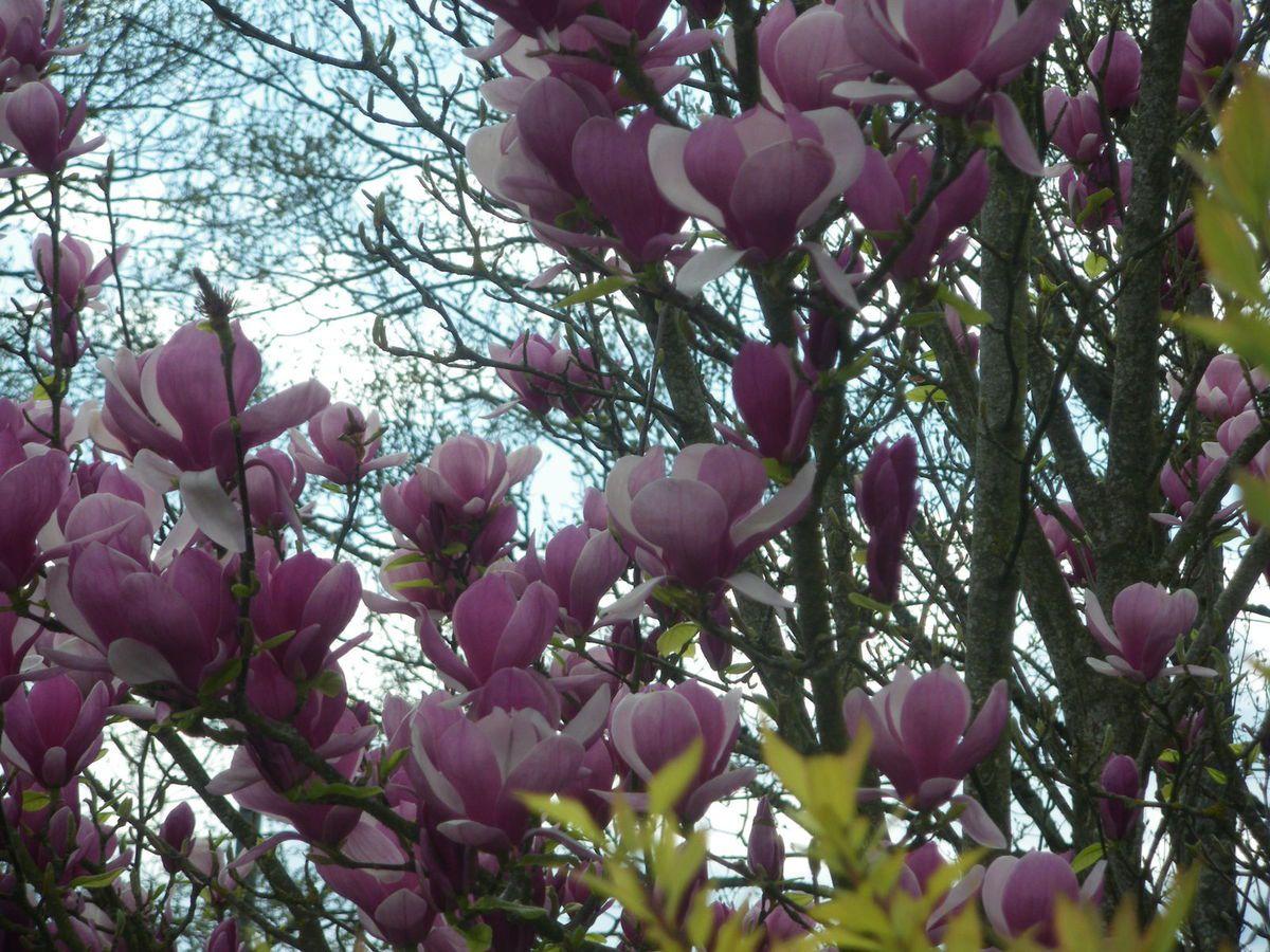 Le début du printemps au Clos des Glycines