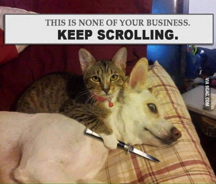 Chat keep scrolling