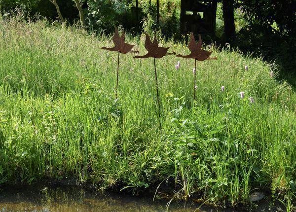 silhouettes de canard du florifer au bord mare