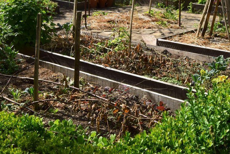 Branchages déposés sur le sol en début de saison
