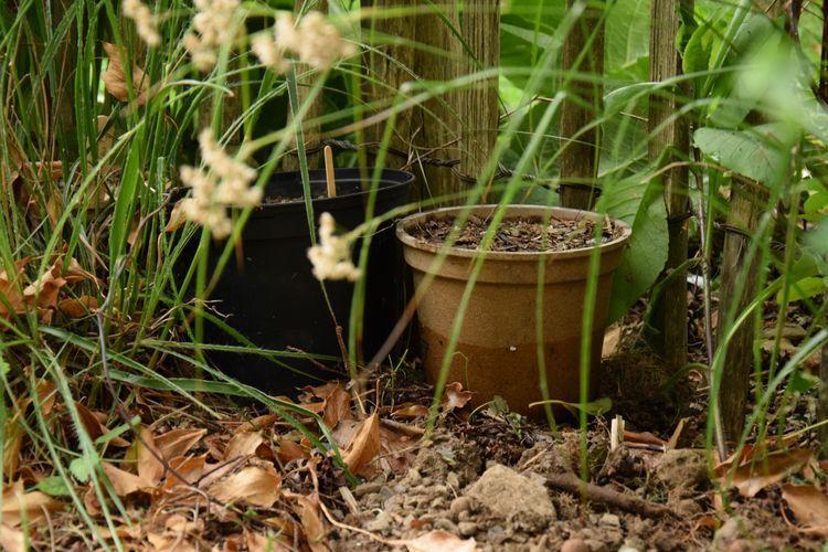 Ma technique pour semer les géraniums vivaces