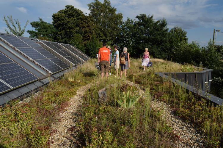 Le toit végétalisé recouvre le bâtiment consacré à la logistique.