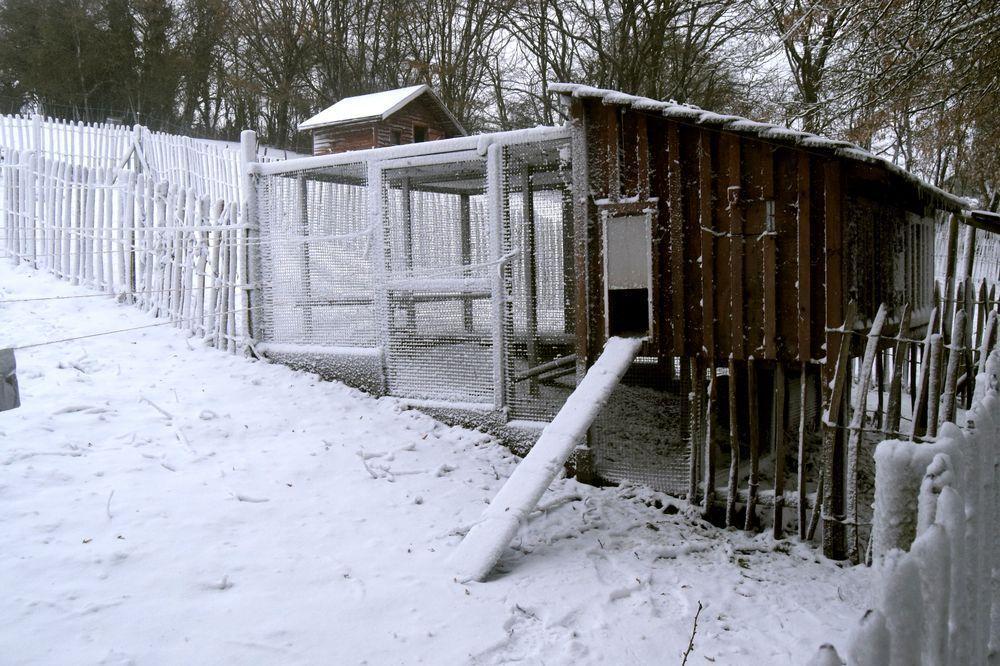 Une porte guillotine et une partie entièrement grillagée pour les jours où nous sortons le soir : les poules sont en sécurité la nuit.