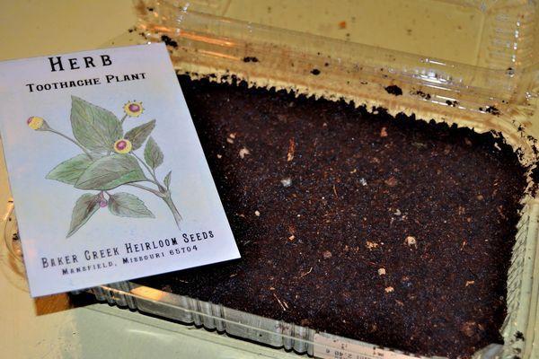 """Matériel de semis : une """"mini serre"""" de récupération, du terreau et... des graines !"""