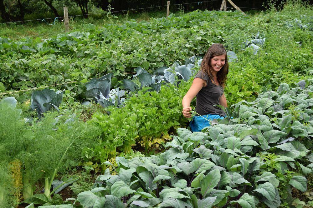 Laura Delfosse à l'œuvre dans son potager. Aucun doute : ici, on sait cultiver !