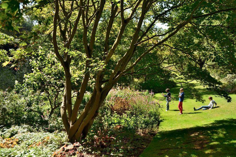 Une taille respectueuse de la nature de l'arbre qui met sa structure en valeur, permet au regard de le traverser et laisse passer la lumière.