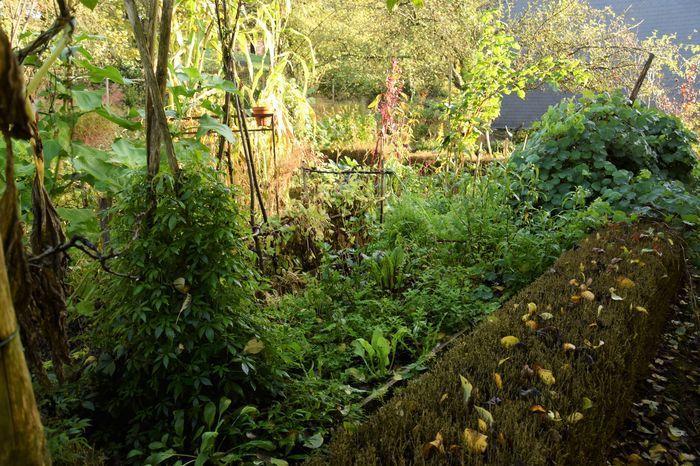 Arbre cache vis a vis quel arbre pour cacher mon vis vis 9 messages jardin cacher vis vis - Haie de jardin qui pousse vite ...