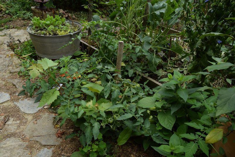 est ce que j 39 arrose trop mes tomates au jardin des. Black Bedroom Furniture Sets. Home Design Ideas