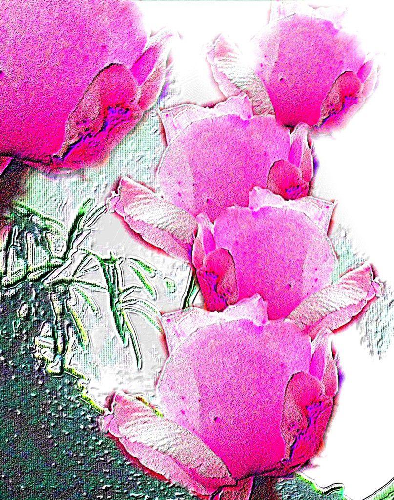 Tulpen in Farbwelten