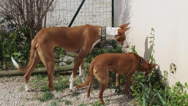 Dolce ma vie en provence podenco story - Maison rustique adorable tennessee nov ...