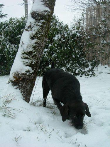 Les podencos dans la neige!